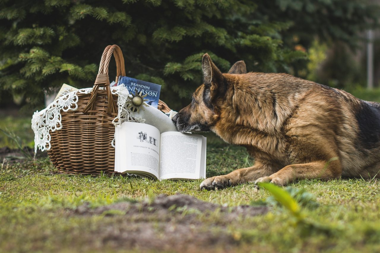 本を読む犬の画像
