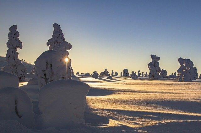 木々の上に雪がこんもり積もった樹氷(tykky)。北フィンランドでよくみられる