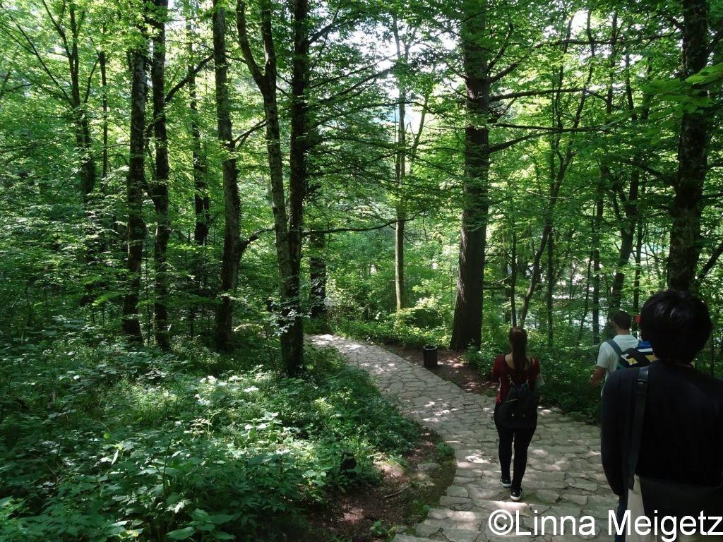 園内の緑に覆われた散策道