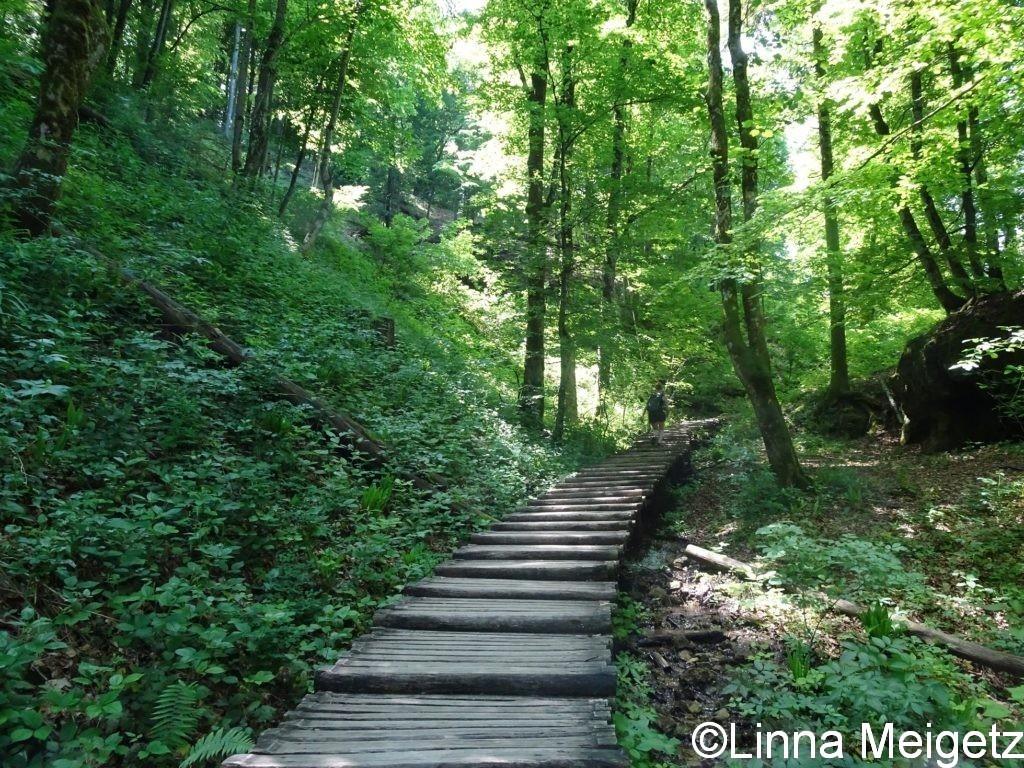 森の中を上っていく遊歩道