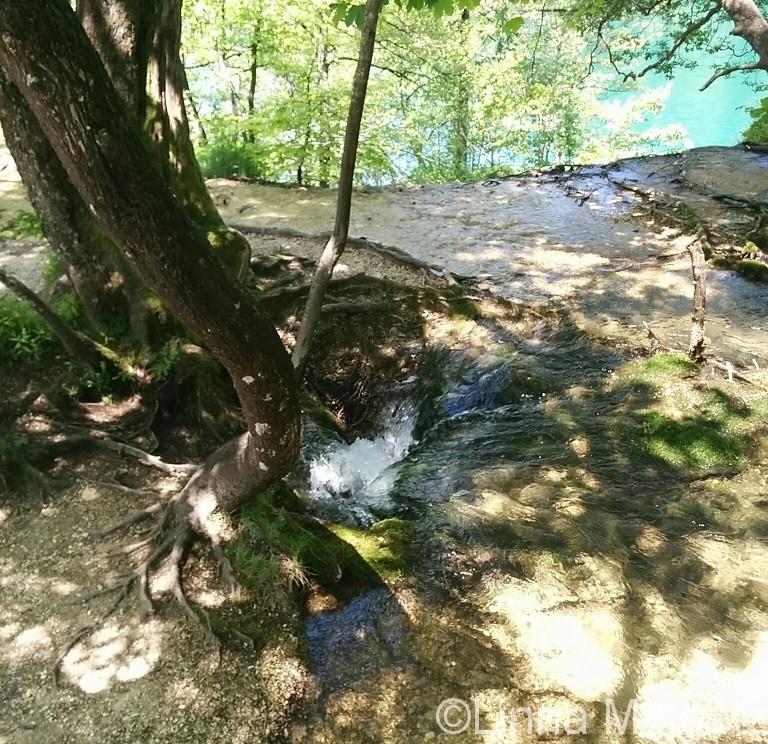 根っこの近くの水が流れ込む穴