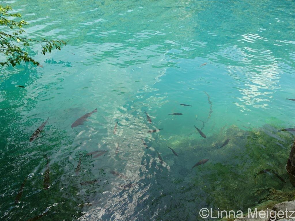 美しい水の中で泳ぐ魚たち