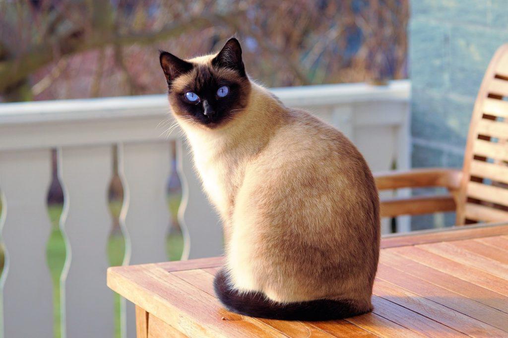 テーブルの上に乗った猫の写真