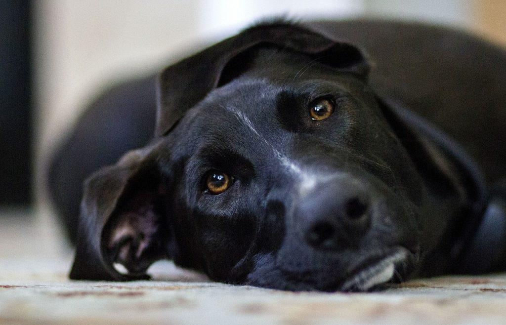 横たわる犬の写真