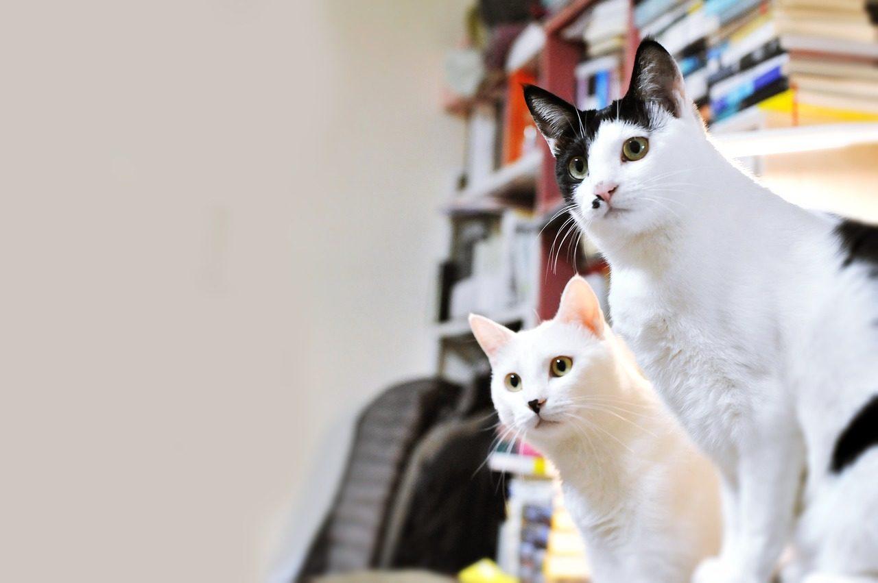 2匹の猫の写真