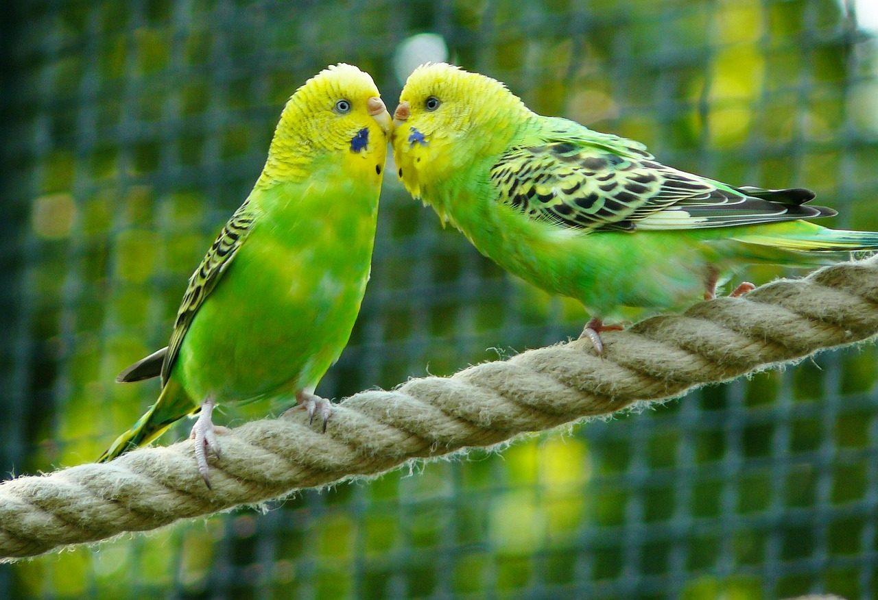 庭の緑色の鳥の写真
