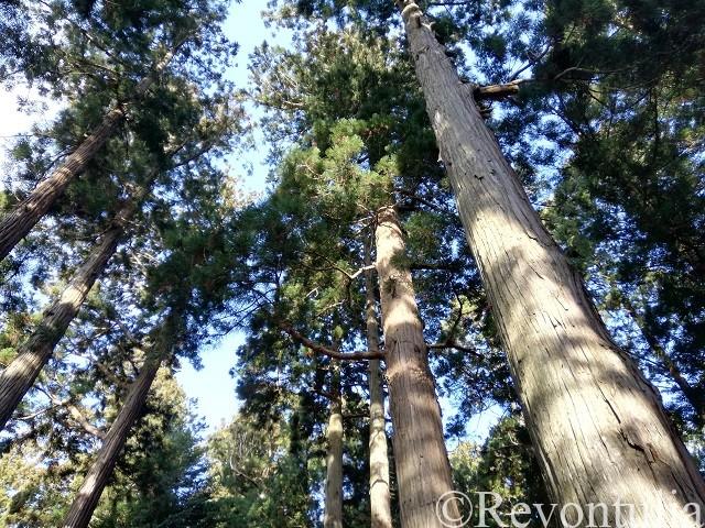 中尊寺境内の森