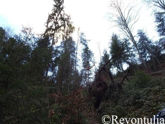 カルフの森