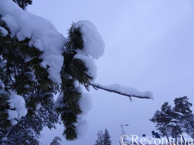 雪をかぶった木の枝