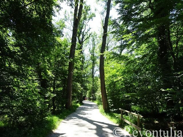 プリーン・アム・キームゼーの男島の森